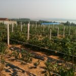 Rushan Winery Project Site